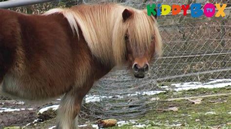zum kaufen bauernhof tiere pferde und esel horses and donkeys