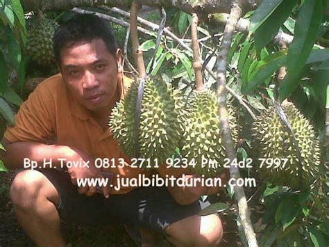 Bibit Pohon Durian Merah durian bawor bibit durian montong bibit durian unggul