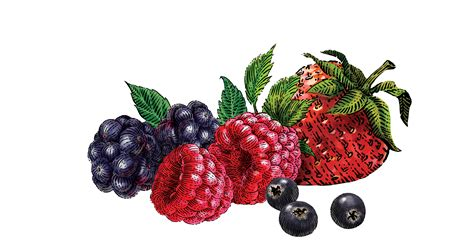 And Berries mixed berries www pixshark images galleries with a