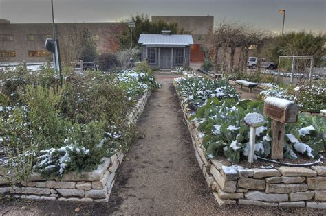 The Gardens Tamu by Photo 693 12 Vegetable Garden With Snow In Tamu Holistic M College Station