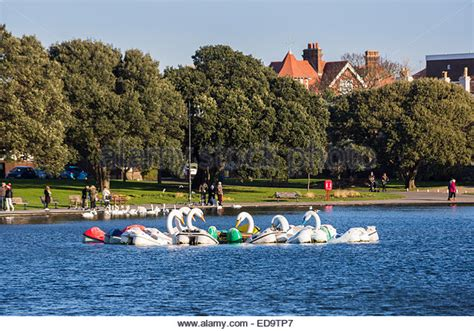 swan boats portsmouth family fun on pedalo in stock photos family fun on