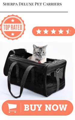 best airline reviews review top 10 what is the best airline pet carrier