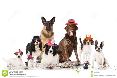 dogs as pets pets carnival stock image image 36508951