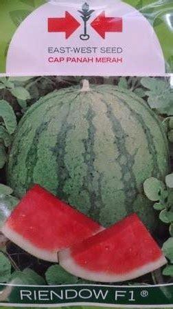 Harga Bibit Semangka Kulit Kuning toko pertanian petani indonesia lmga agro semangka non biji