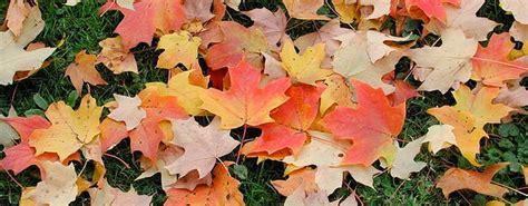 fall gardening fall gardening tips
