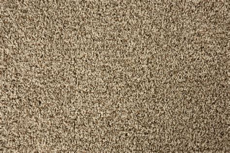 next carpets and rugs next day carpet 100 saxony carpet allfloors frosted 100 fort collins discount door