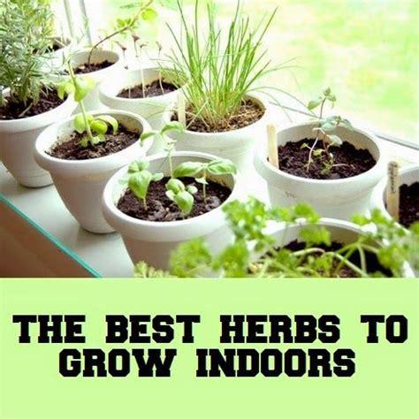 best herbs to grow indoors top 25 best best indoor trees ideas on pinterest indoor