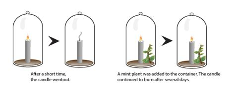 design an experiment using a seedling and a block of agar photosynthesis i biology visionlearning
