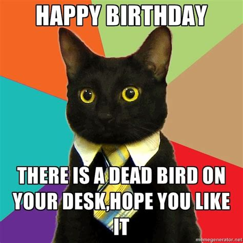 Black Birthday Meme - 1000 images about business cat on pinterest cats