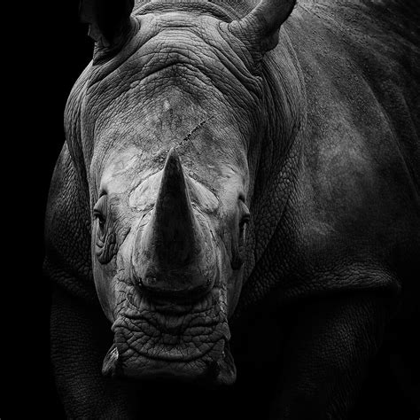 black  white animals  lukas holas