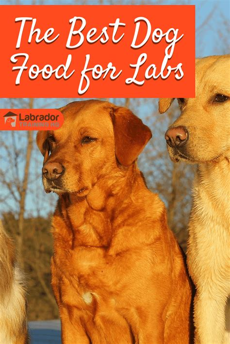 best food for large breeds best puppy food for labs and large breeds 7 reviews