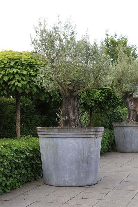 Tree Planters Notes by 749 Best Images About Gardens On