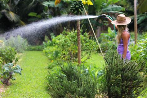 Take A Garden Tour Of One Of The Best Hawaii Botanical Best Way To Water A Vegetable Garden