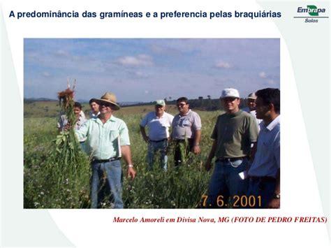Tas Pedro 104 import 226 ncia das leguminosas no manejo sustent 225 vel de solos tropicais