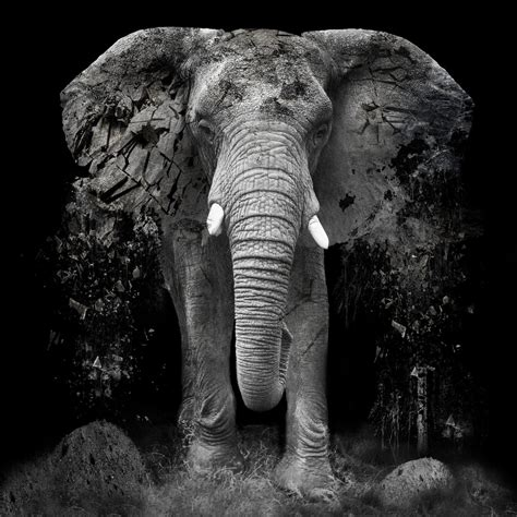 disappearance   elephant erik brede photography
