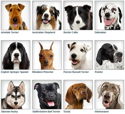 types of dogs and their personalities breeds characteristics chart breeds picture