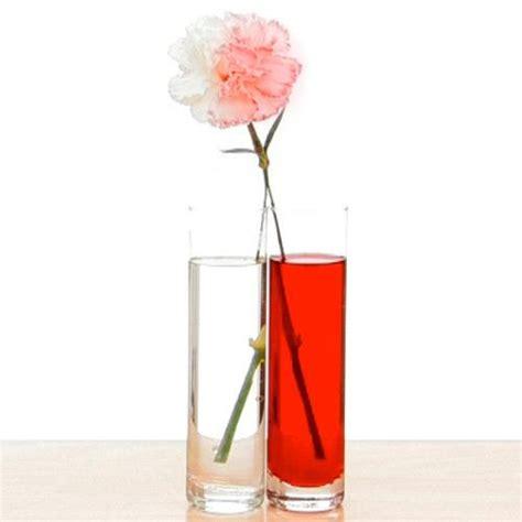 color changing carnations color changing carnations experiments steve spangler