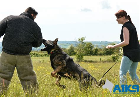 Protection From Dogs by Personal Protection A1k9 Family Protection Trainers
