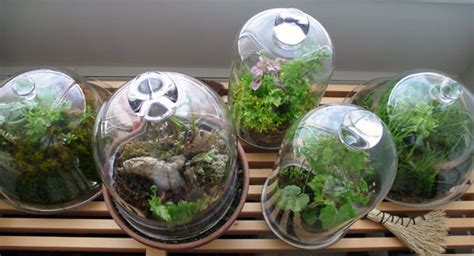 Glass Gardens by Cloche Gardening Glass Images