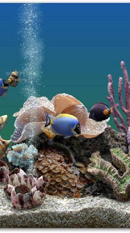 fish wallpapers   zedge