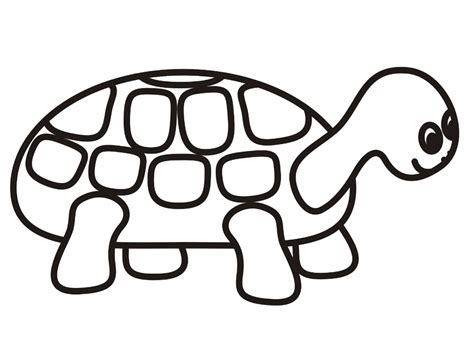 Turtle Coloring Pages Related Keywords &amp Suggestions  sketch template