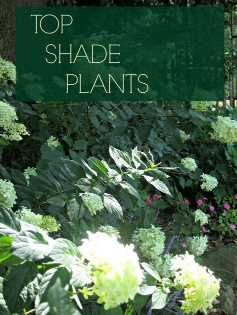 1000 images about greenery on pinterest landscaping