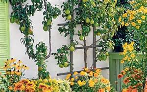 Vertical Fruit Garden Plant Fruit Trees To Make Your Garden Complete Telegraph