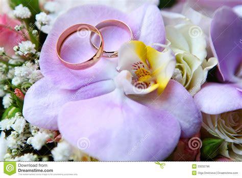 brautigams orchard eheringe auf orchidee lizenzfreies stockbild bild 33032796