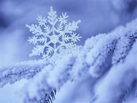 wallpaper neve frozen winter snowflake wallpaper high definition high