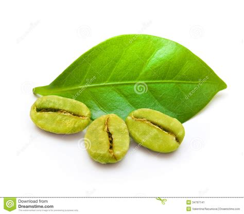 Coffee Green Bean green coffee beans stock image image of brew