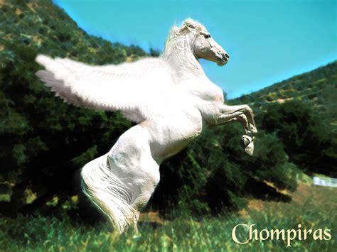 imagenes de pegasos y unicornios reales pegaso 187 harrymedia galer 237 a de fotos de harry potter
