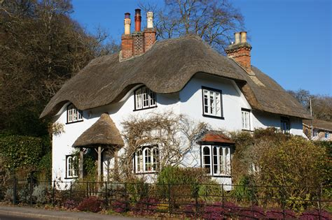 a cottage a walk in the new forest deer thatched cottages and new