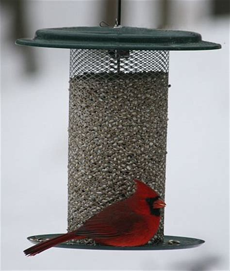 specialty bird feeders for feeding wild birds quality