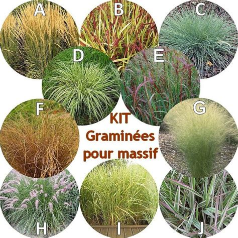 gramin 233 es pour massif en kit de 10 arbustes