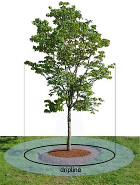fruit tree watering system tree care when to water trees gardener s supply