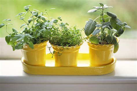grow oregano indoors