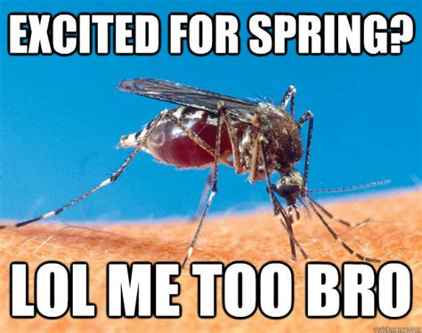 Mosquito Meme - excited for spring lol me too bro pictures photos and