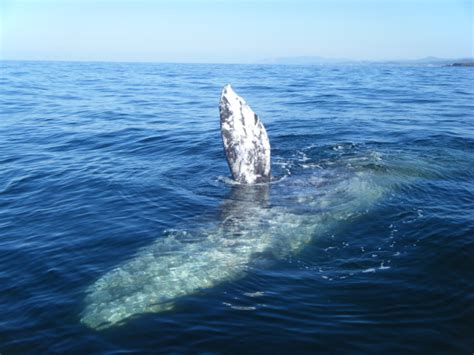 oregon whale watching tours whale s tail charters