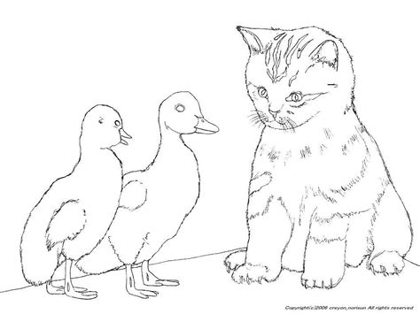 Cute Kitten Cat Coloring Pages