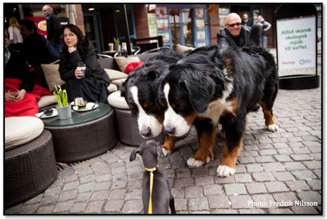 scary puppies socializing tips our world can be a scary place dogmantics