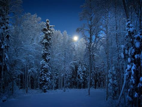 snowy alaskan cluster light tree national geographic simple interesting
