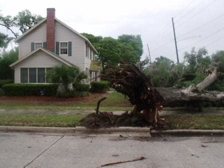 home insurance trees close to deland mom struck in head by tree that splits home in half during fast moving