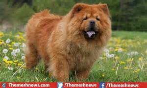 How To Take Care Of A Blind Dog Top 10 Most Dangerous Dog Breeds In The World 2017