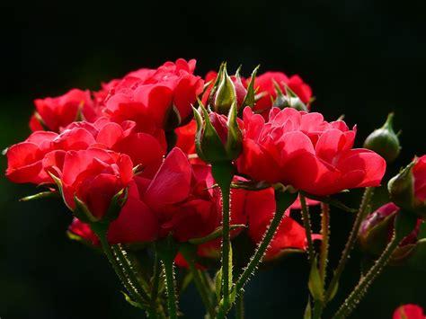 fiori per uomini quali fiori regalare a un uomo
