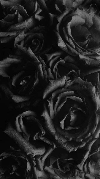 images  ive   blacks  pinterest