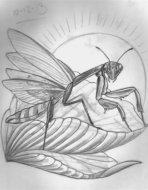 praying mantis tattoo designs sketch a day insects december 8th 14th