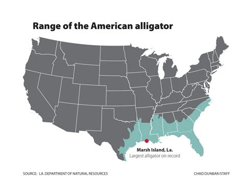 alligators in map how are south carolina s gators and where are