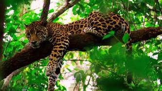 Jaguars Rainforest Scuba Diving In Belize Book Your Next Adventure With Us