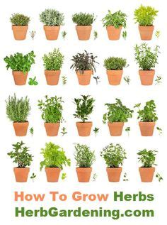 how to start your own herb garden activist awake 25 ways to start an indoor herb garden gardens jars and
