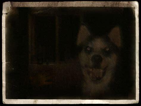 imagenes de smiledog jpg smile dog jpg historia loquendo taringa